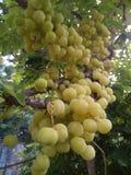 Früchte mit hohem Vitamin- Cinhalt Lizenzfreies Stockfoto