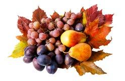 Früchte und Herbstlaub lokalisiert Lizenzfreie Stockfotografie