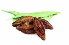 Früchte und neem Ayurvedic leaved Lizenzfreies Stockbild