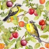 Früchte, Vögel - arbeiten Sie mit Pflaume, Kirsche, Äpfel im Garten Nahtloses Muster watercolor Lizenzfreies Stockfoto