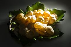 Früchte von Borassus flabellifer, allgemein bekannt als Zweifel Palme oder Tadgola stockfotografie
