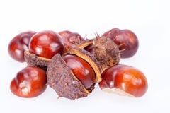 Früchte von Kastanien im trockenen Oberteil lokalisiert auf weißem Hintergrund Lizenzfreie Stockfotografie