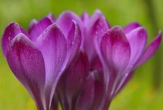 Frühe blühende Pflanzen lizenzfreies stockfoto