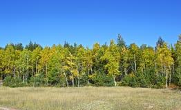 Frühe Fall-Farbe Stockfoto