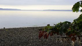 Frühe Fallblätter mit Kelp stock footage
