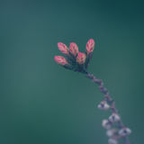 Frühe Schönheit Stockfotografie