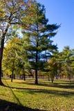 Früher Fall-Tag am Park stockbilder