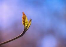Früher Frühling Stockfotografie