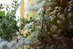 Früher Frühling Stockbild