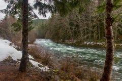Früher Frühling im Wald Lizenzfreie Stockfotos