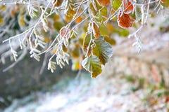Früher Frost Stockbilder