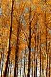 Früher Herbst lizenzfreie stockfotos