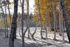 Früher Herbst Stockfoto