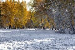 Früher Herbst Stockbild