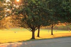 Früher Herbstabend im Park Stockfotografie