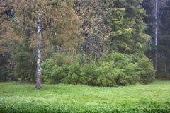 Früher Herbstbaum Stockbild