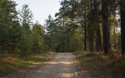 Früher Herbstmorgen im Wald lizenzfreie stockfotos