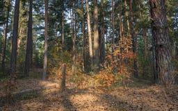 Früher Herbstmorgen im Wald lizenzfreies stockfoto