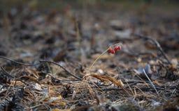 Früher Herbstmorgen im Wald stockfotografie