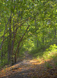 Früher Herbstwald Stockfotos