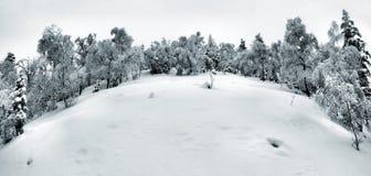 Früher kalter und nebelhafter Morgen am alten Reifbuchenwald auf dem Berg, Ansicht über gefrorenes Gras und Flusssteine zum Hügel. Lizenzfreie Stockfotos