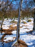 Früher kalter und nebelhafter Morgen am Reifgras auf Berg, Ansicht über gefrorenes Gras und Flusssteine zu den Bäumen und zum Hüg Lizenzfreies Stockbild