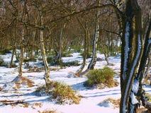 Früher kalter und nebelhafter Morgen am Reifgras auf Berg, Ansicht über gefrorenes Gras und Flusssteine zu den Bäumen und zum Hüg Lizenzfreie Stockfotografie