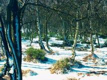 Früher kalter und nebelhafter Morgen am Reifgras auf Berg, Ansicht über gefrorenes Gras und Flusssteine zu den Bäumen und zum Hüg Stockfoto