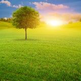 Früher Morgen auf der grünen Sommerwiese Stockbilder