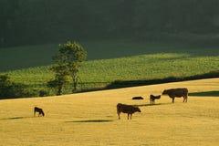 Früher Morgen auf einem Ackerland Stockbild