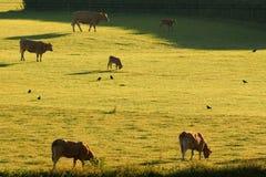 Früher Morgen auf einem Ackerland Lizenzfreie Stockfotos