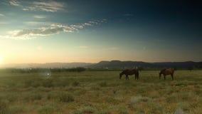 Früher Morgen Cloudscape mit Fütterungspferden stock footage