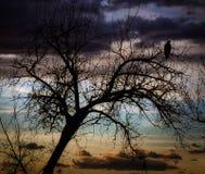 Früher Morgen Eagle im Baum Stockbild