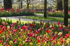 Früher Morgen im bunten Frühlingsgarten Stockfoto