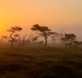 Früher Morgen im nebeligen Sumpf Lizenzfreie Stockbilder