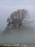 Früher Morgen Misty Landscape Cotswolds, nahe der Splitterung von Norton Stockfotografie