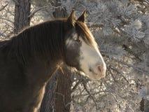 Früher Morgen-Pferd Stockbild