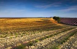 Früher Morgen in Provence lizenzfreies stockfoto