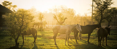 Früher Morgen-Ranch Stockfoto