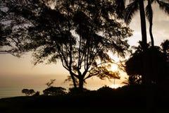 Früher Morgen-Sonnenaufgang durch die Bäume über einer Insel und einem Ozean Stockbild