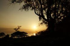 Früher Morgen-Sonnenaufgang durch die Bäume über einer Insel und einem Ozean Stockfotos