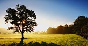 Früher Morgen-Sonnenlicht Lizenzfreie Stockbilder