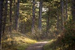 Früher Morgenspaziergang durch einen schön beleuchteten Wald stockfoto