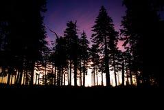 Früher Sonnenaufgang hinter Bäumen Stockbilder
