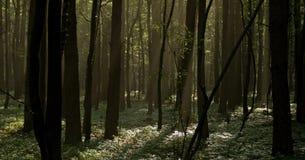 Früher Sonnenaufgang am nebeligen Wald Lizenzfreie Stockfotos