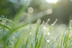 Früher Tau auf dem Gras Lizenzfreies Stockfoto