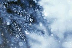 Früher Winter im Wald Stockbild