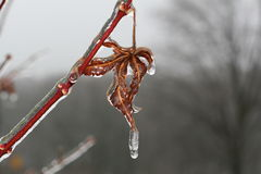 Früher Winterfrost auf Blatt   Lizenzfreies Stockfoto
