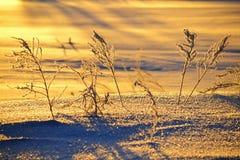 Früher Wintermorgen Stockfotografie