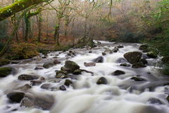 Früheres dartmoor Shaugh Nationalpark, Devon Stockbild